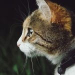 cat in collar from the side