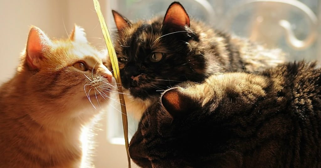 cats sniffing a plant