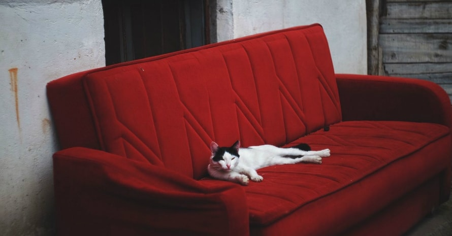 cat on the red couch