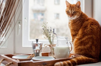 Best Automatic Feeders for Cats to Buy This Year