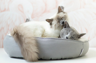 How Do Cats Communicate with Each Other?