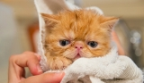 Best Flea Shampoo for Cats: Top 6 Most Effective Flea Shampoos