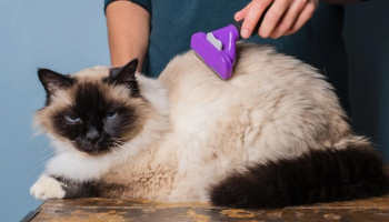 6 Best Cat Hair Removers That You Can Get in 2021
