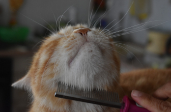 Best Flea Comb for Cats – Tough On Fleas but Gentle On Cats
