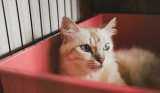 Best Cat Litter Boxes: How to Choose the One Your Feline Needs