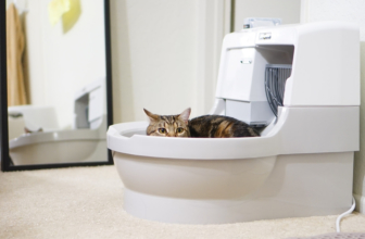 Dog Proof Cat Litter Box: 7 Best Products for Your Pet in 2020 Reviewed